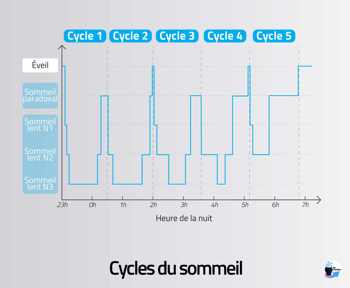 Représentation graphique des cycles du sommeil au cours d'une nuit