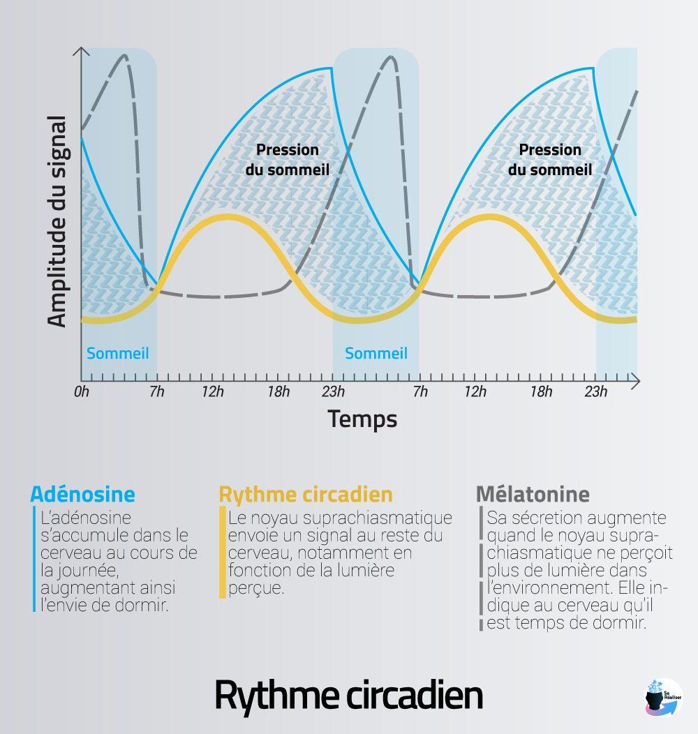 Représentation graphique du rythme circadien